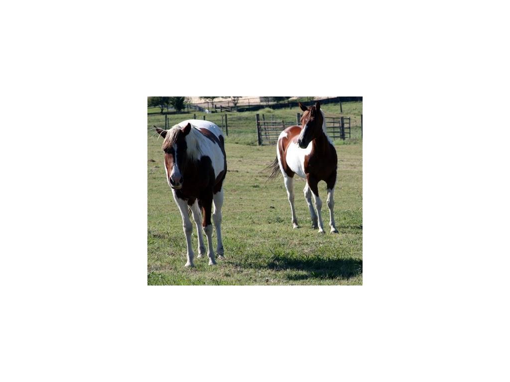Sold Property | 1291 Gray Branch Road McKinney, Texas 75071 5