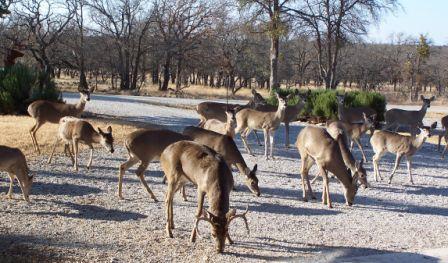 Active | Lot252 Lakeside  Circle May, TX 76857 3