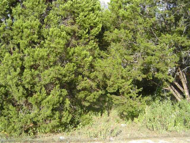Sold Property   10509 W Lakeview  DR Jonestown, TX 78645 0