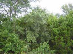 Sold Property | 11009 Sage  DR Jonestown, TX 78645 0