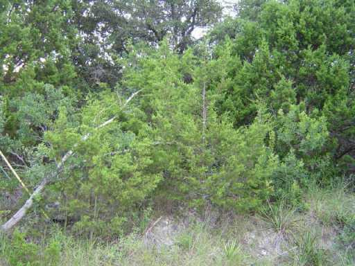 Sold Property | 11108 W LAKE TERRACE  DR Jonestown, TX 78645 1