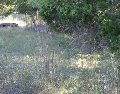 Sold Property | 21303 Santa Madrina  LN Lago Vista, TX 78645 0