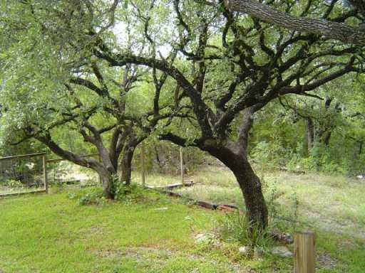 Sold Property | 11717 Lindeman  LOOP Leander, TX 78641 5