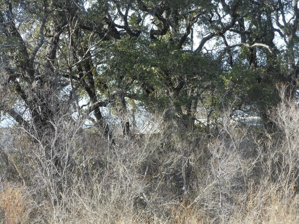 Sold Property | 18312 Center  ST Jonestown, TX 78645 1