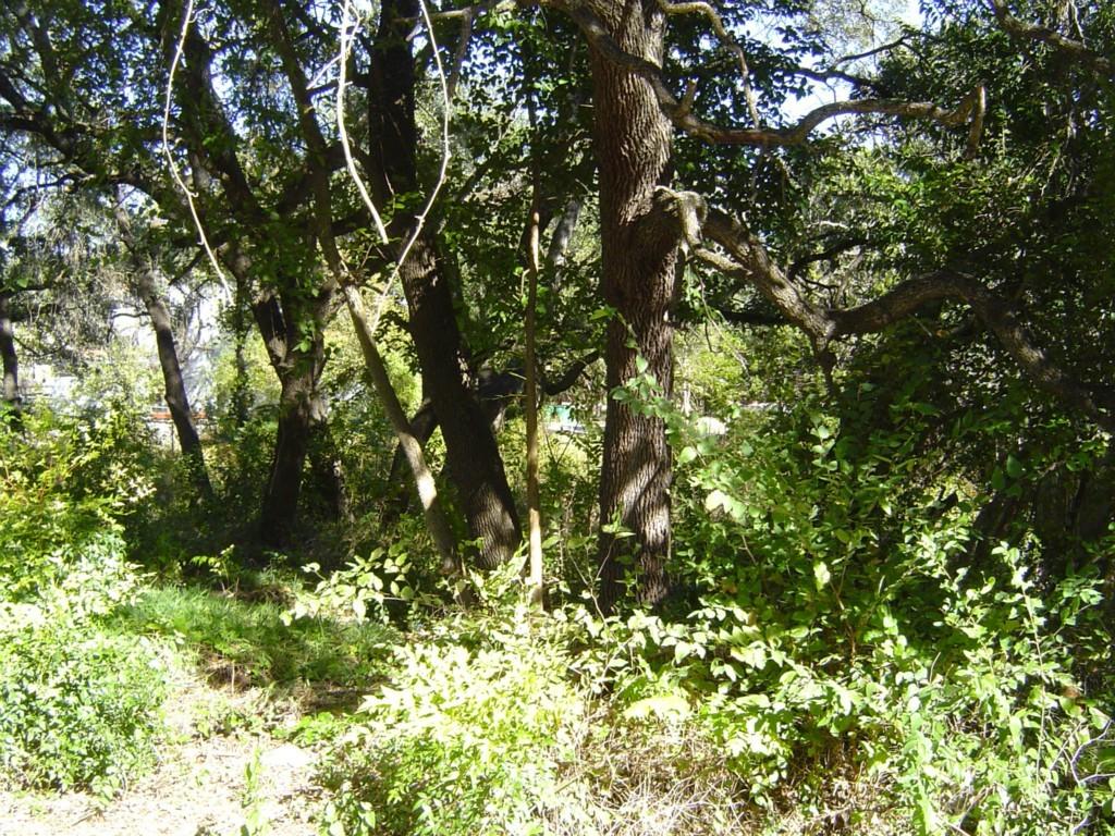 Sold Property   10807 W Lakeview  DR Jonestown, TX 78645 1