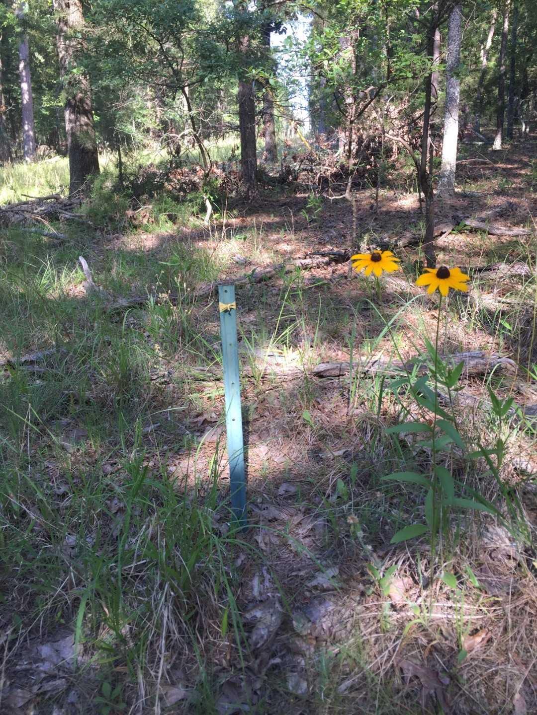 Pending | Wolf Trail Lot #3 Moyers, OK 74523 0