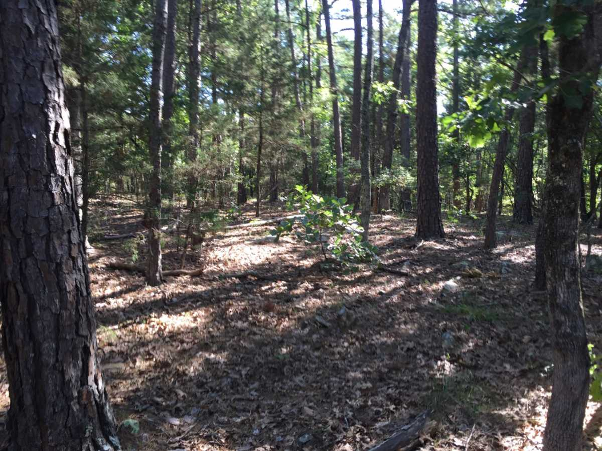 Active | Wolf Trail Lot #3 Moyers, OK 74523 9
