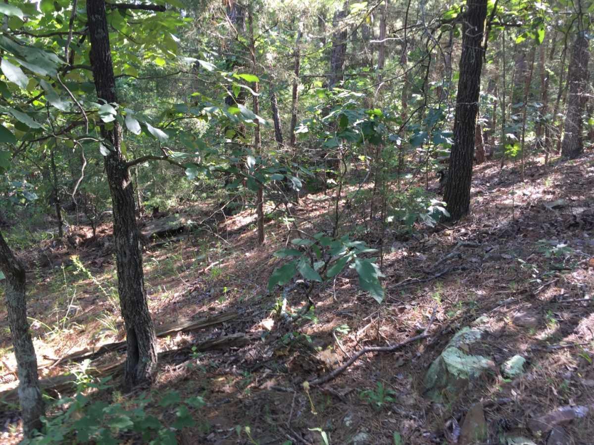 Pending | Wolf Trail Lot #3 Moyers, OK 74523 15