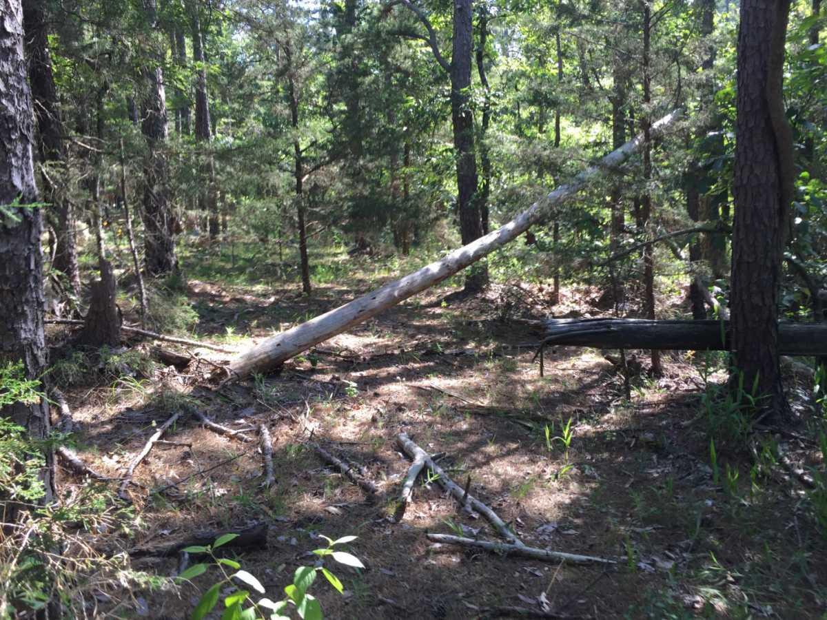 Pending | Wolf Trail Lot #3 Moyers, OK 74523 7