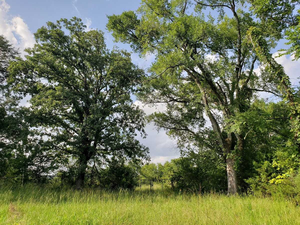 Active | RIVER FRONT 80 ACRES Nashoba, OK 74558 23