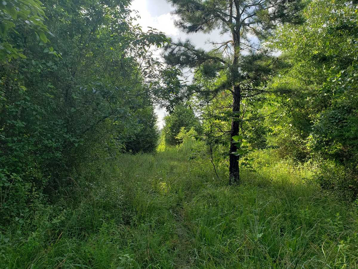 Active | RIVER FRONT 80 ACRES Nashoba, OK 74558 27