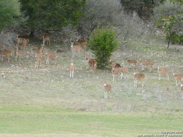 Active   LOT 12 Oak Hills Dr Bandera, TX 78003 18