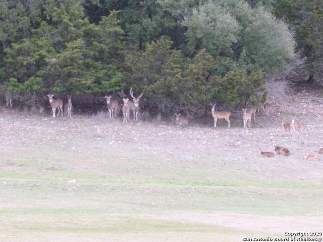 Active   LOT 12 Oak Hills Dr Bandera, TX 78003 19
