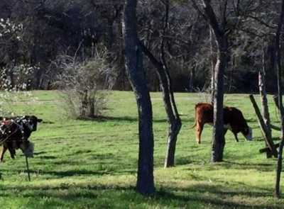 Active | 3320 Ovilla Road Ovilla, Texas 75154 5