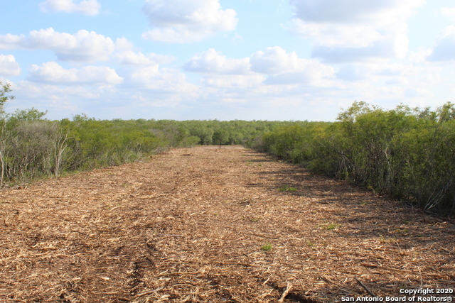 New | 10333 FM 2779 - Tract 3 Pearsall, TX 78061 19