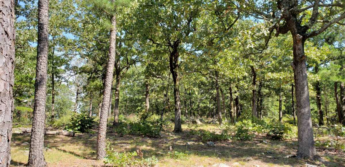 Pending | SE 180th Rd/Water Tower Rd Talihina, OK 74571 21