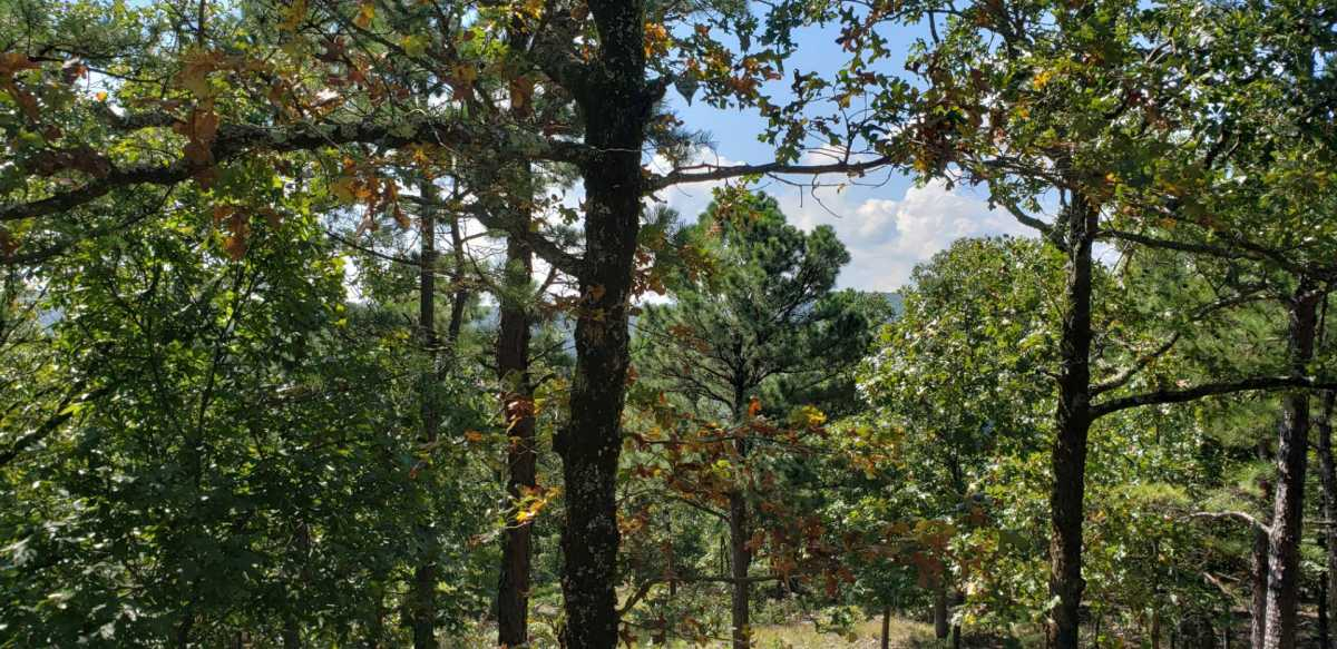 Pending | SE 180th Rd/Water Tower Rd Talihina, OK 74571 22