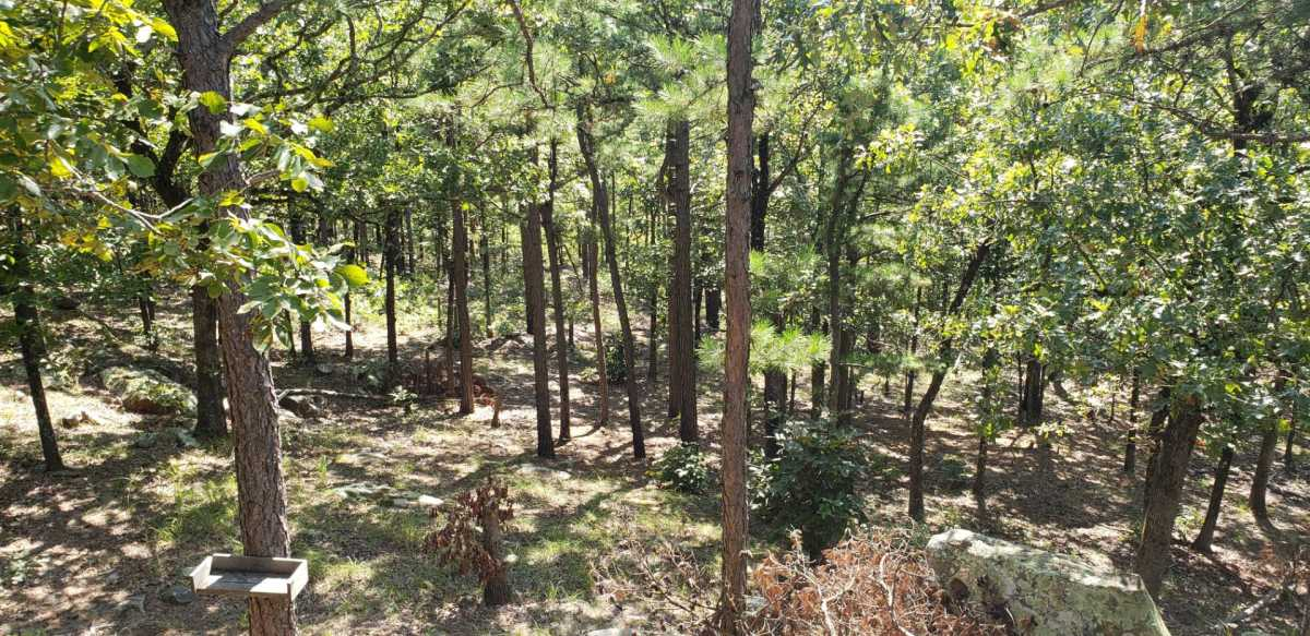 Pending | SE 180th Rd/Water Tower Rd Talihina, OK 74571 23