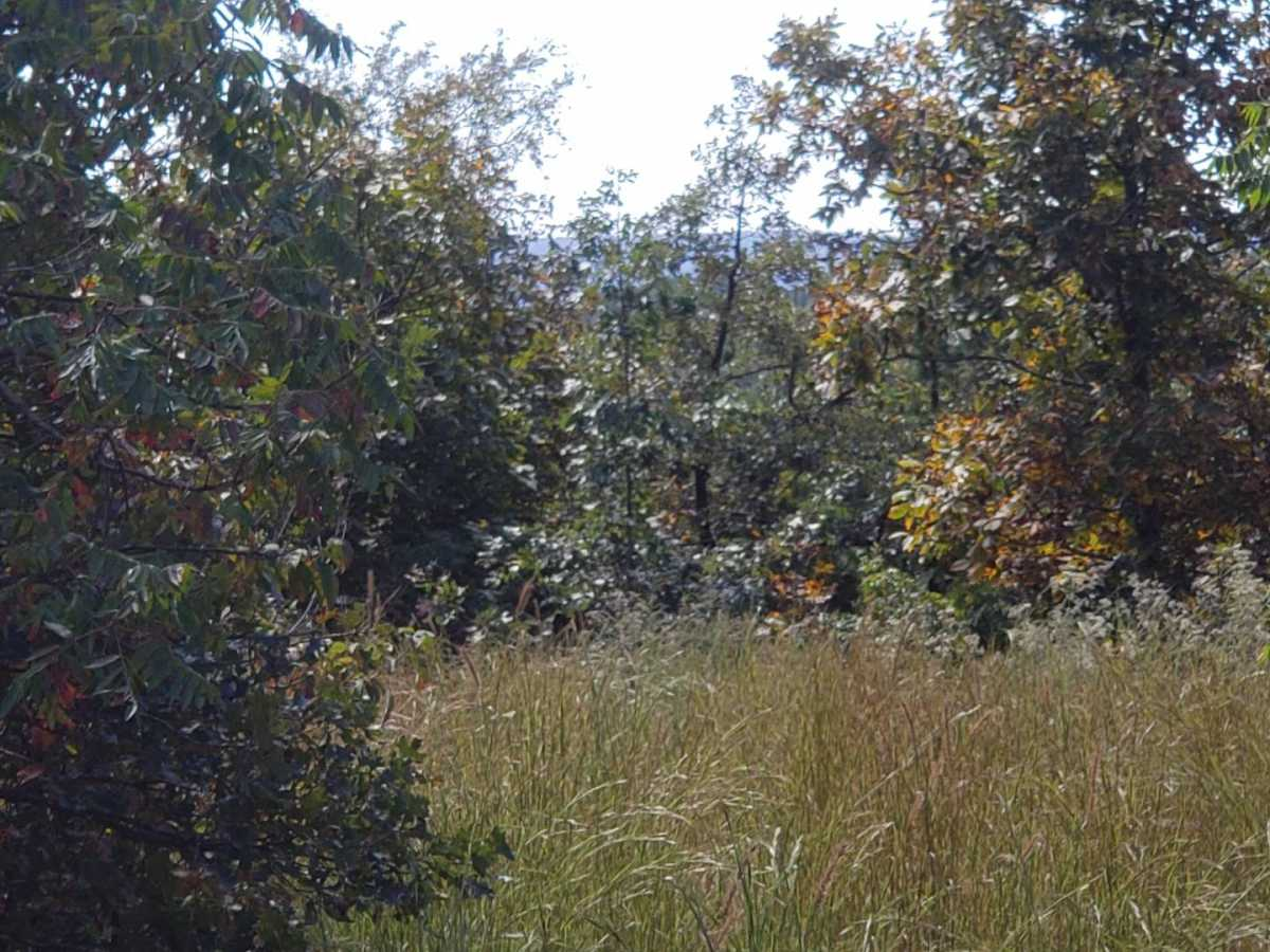 land, ranch, recreational, hunting, oklahoma, cabin | Flag Pole Mountain Rd Clayton, OK 74536 12