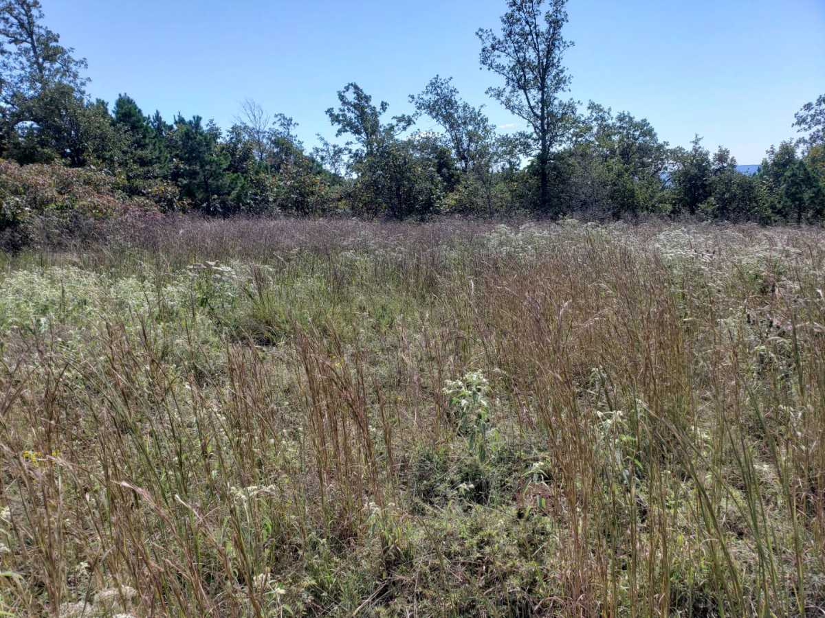 land, ranch, recreational, hunting, oklahoma, cabin | Flag Pole Mountain Rd Clayton, OK 74536 3