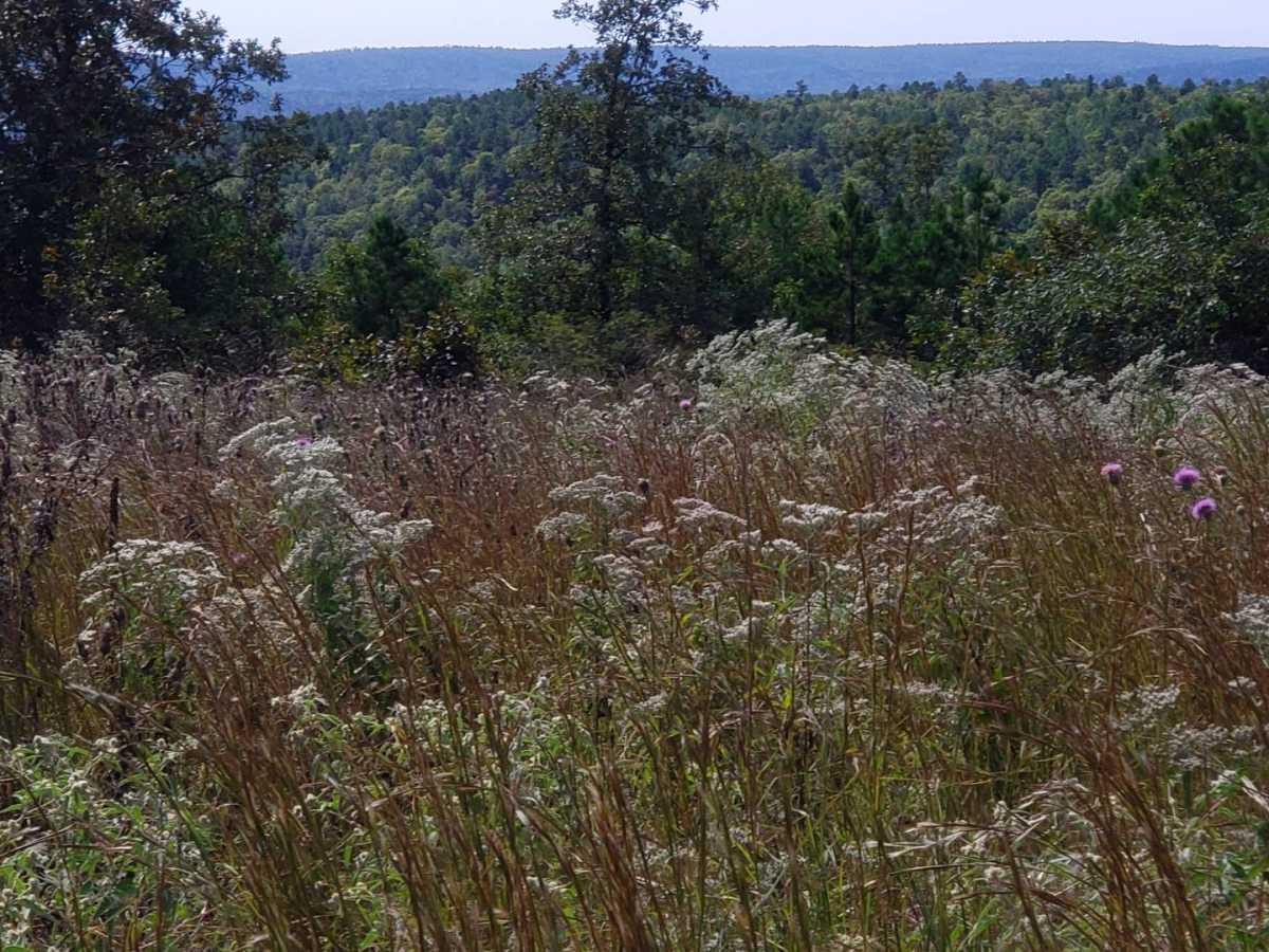land, ranch, recreational, hunting, oklahoma, cabin | Flag Pole Mountain Rd Clayton, OK 74536 5