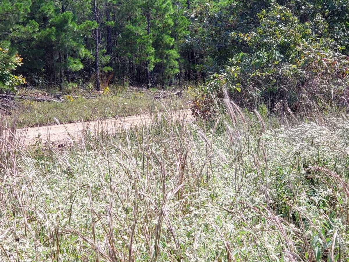 land, ranch, recreational, hunting, oklahoma, cabin | Flag Pole Mountain Rd Clayton, OK 74536 6