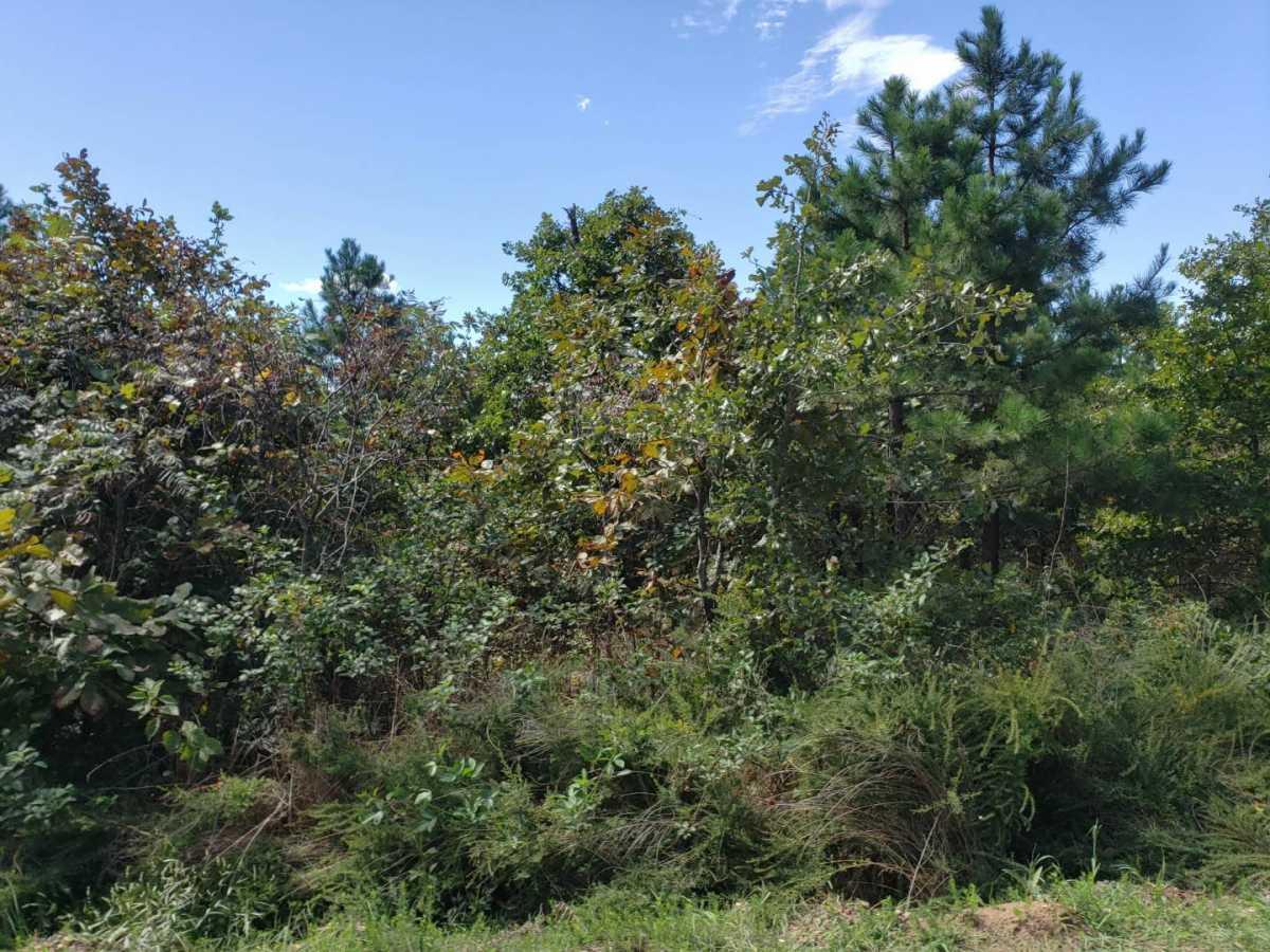 land, ranch, recreational, hunting, oklahoma, cabin | Flag Pole Mountain Rd Clayton, OK 74536 9