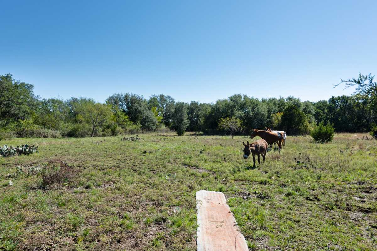 Hunting, Ranch, Ponds, Cattle, Horses | 2517 County Road 2600 Lometa, TX 76853 23
