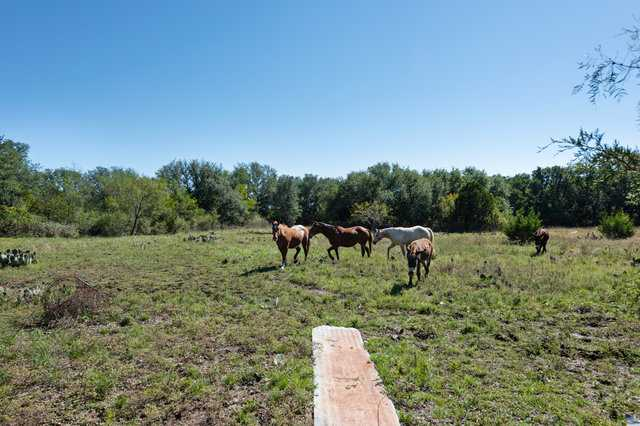 Hunting, Ranch, Ponds, Cattle, Horses | 2517 County Road 2600 Lometa, TX 76853 32