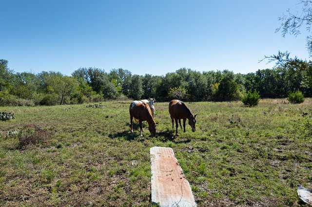 Hunting, Ranch, Ponds, Cattle, Horses | 2517 County Road 2600 Lometa, TX 76853 33