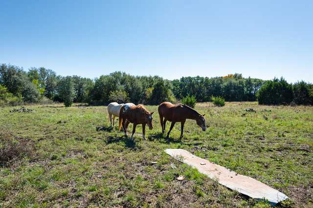 Hunting, Ranch, Ponds, Cattle, Horses | 2517 County Road 2600 Lometa, TX 76853 34