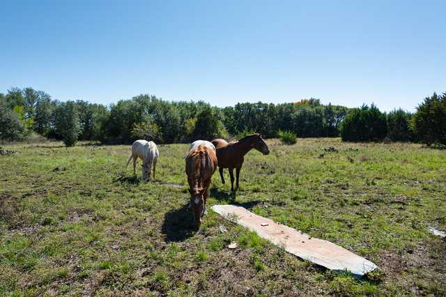 Hunting, Ranch, Ponds, Cattle, Horses | 2517 County Road 2600 Lometa, TX 76853 35