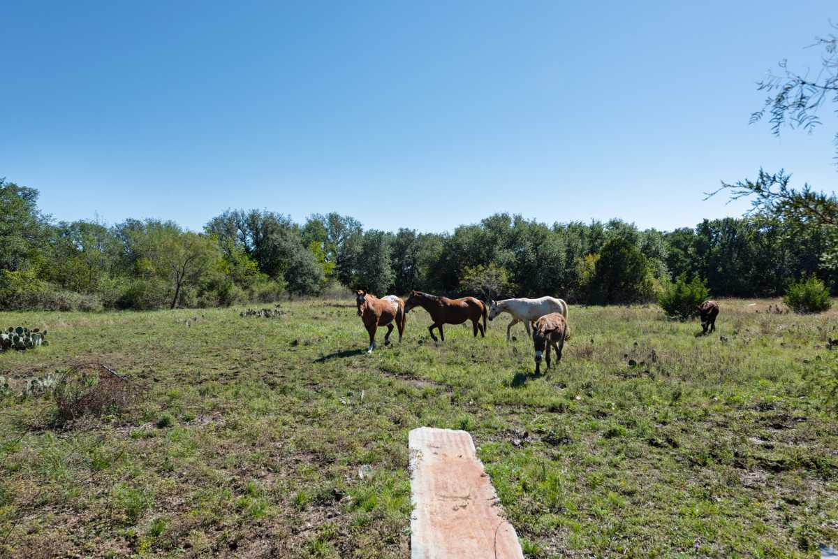 Hunting, Ranch, Ponds, Cattle, Horses | 2517 County Road 2600 Lometa, TX 76853 24