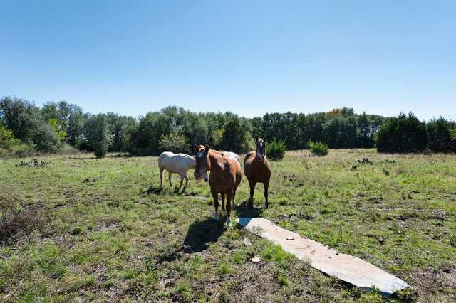 Hunting, Ranch, Ponds, Cattle, Horses | 2517 County Road 2600 Lometa, TX 76853 36