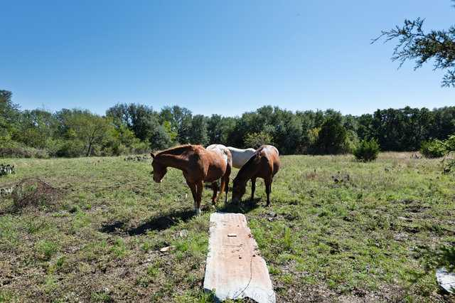Hunting, Ranch, Ponds, Cattle, Horses | 2517 County Road 2600 Lometa, TX 76853 37