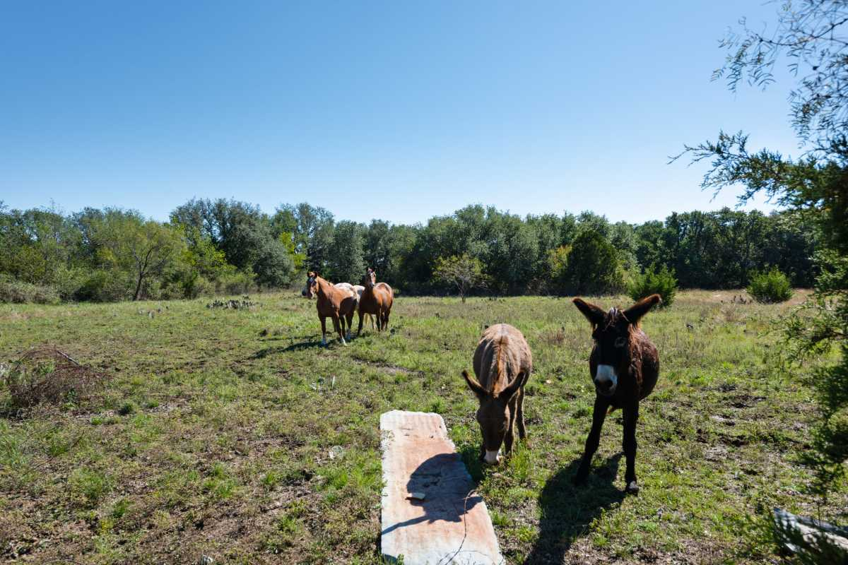 Hunting, Ranch, Ponds, Cattle, Horses | 2517 County Road 2600 Lometa, TX 76853 27