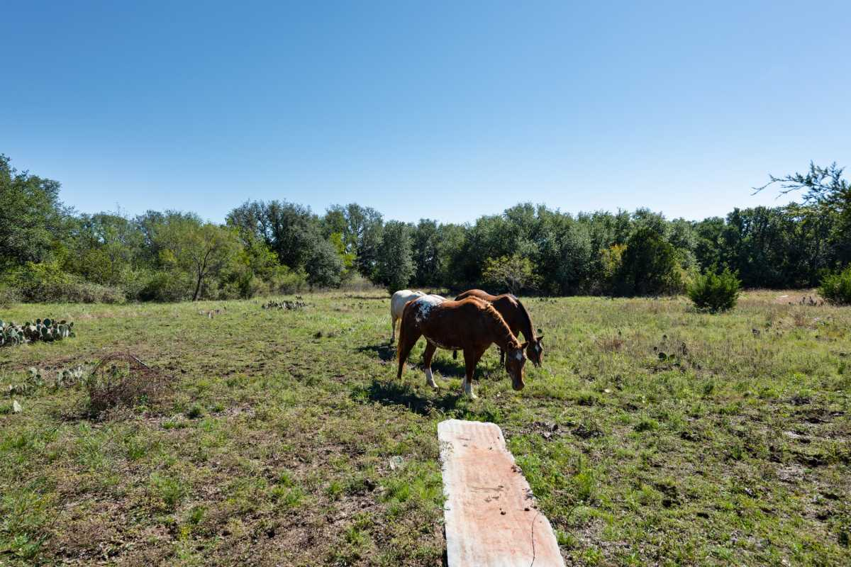 Hunting, Ranch, Ponds, Cattle, Horses | 2517 County Road 2600 Lometa, TX 76853 30