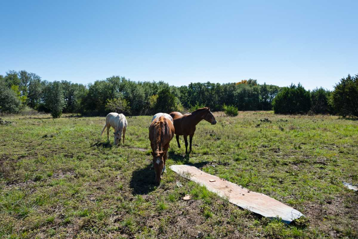 Hunting, Ranch, Ponds, Cattle, Horses | 2517 County Road 2600 Lometa, TX 76853 70