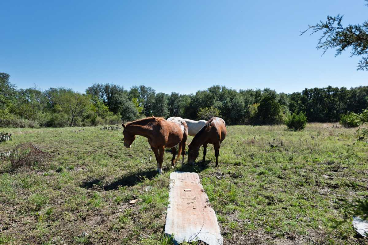 Hunting, Ranch, Ponds, Cattle, Horses | 2517 County Road 2600 Lometa, TX 76853 84