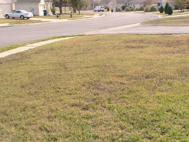 Withdrawn | 104 Orchard WAY Hutto, TX 78634 11